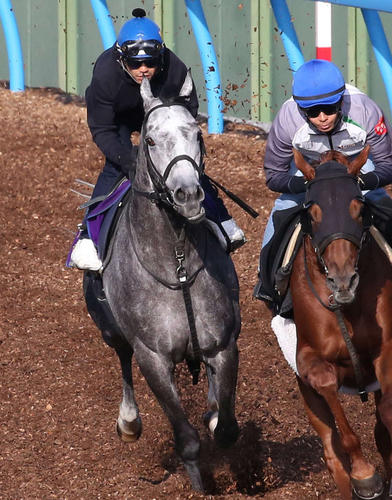 松岡騎手を背に美浦ウッドでマイネルセリオン(右)と併せたウインブライト(撮影・丹羽敏通)